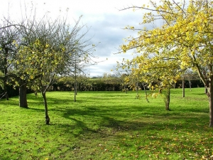 Through the orchard to the 'present' landscape beyond