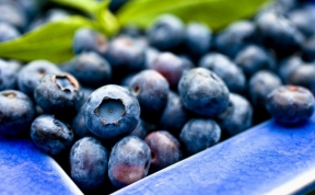 Food Tips Organic